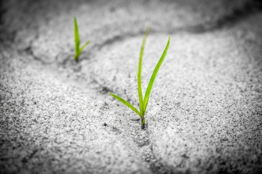 Grass-1913167_1920
